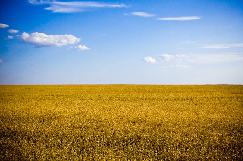 A Ukrainian wheat field in 2008.