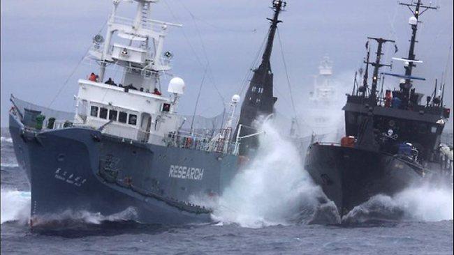 An undated photo of a Sea Shepard ship ramming a Japanese whaler. Sea Shepard Photo