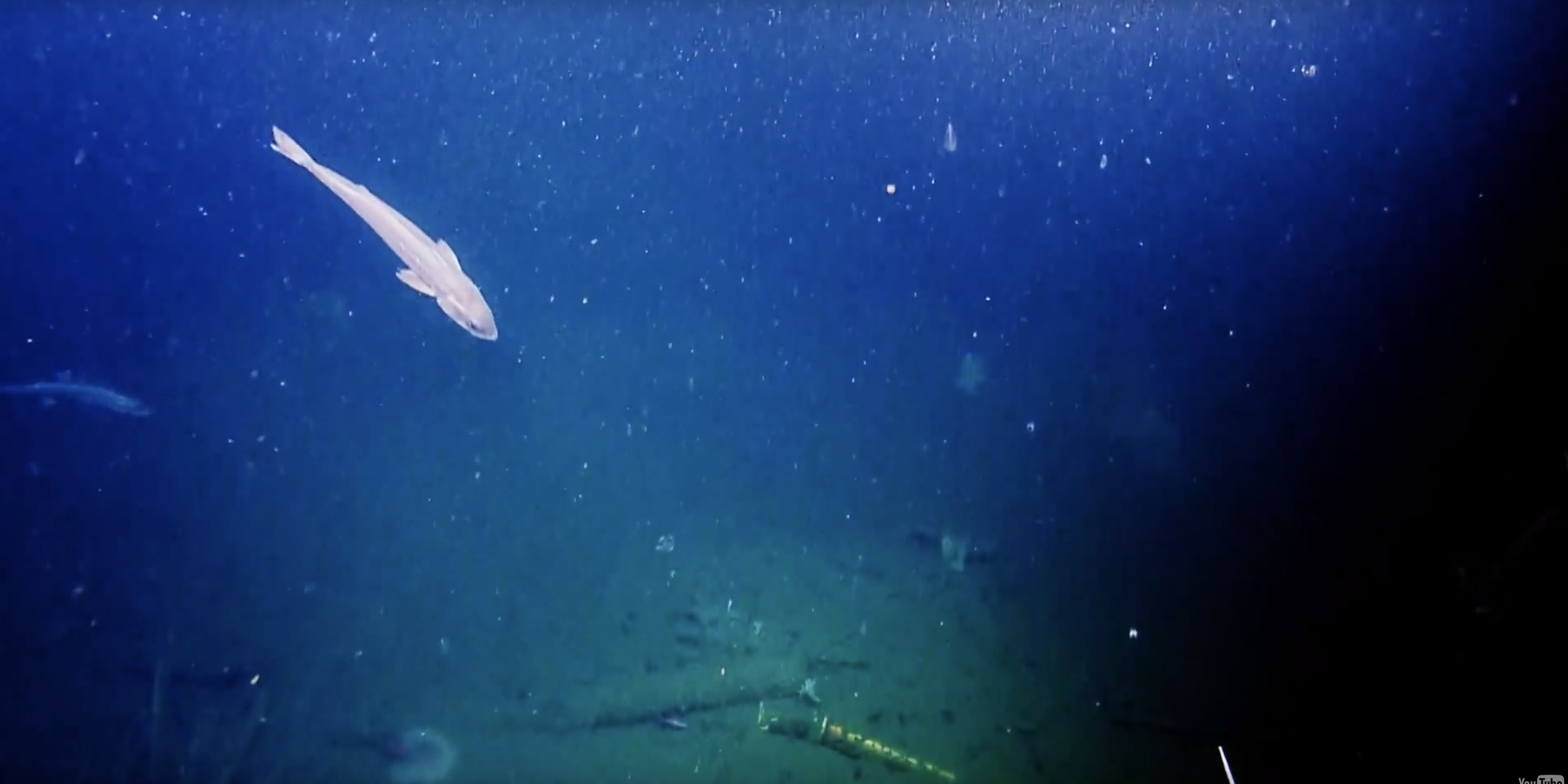 A screen grab of video from the Aug. 18, 2015 dive on the USS Macon. Ocean Exploration Trust Photo