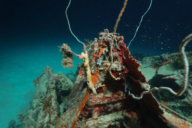 Curiosity and High-tech Sonar Uncover Lost WWII Torpedo Bomber 72 Years Later