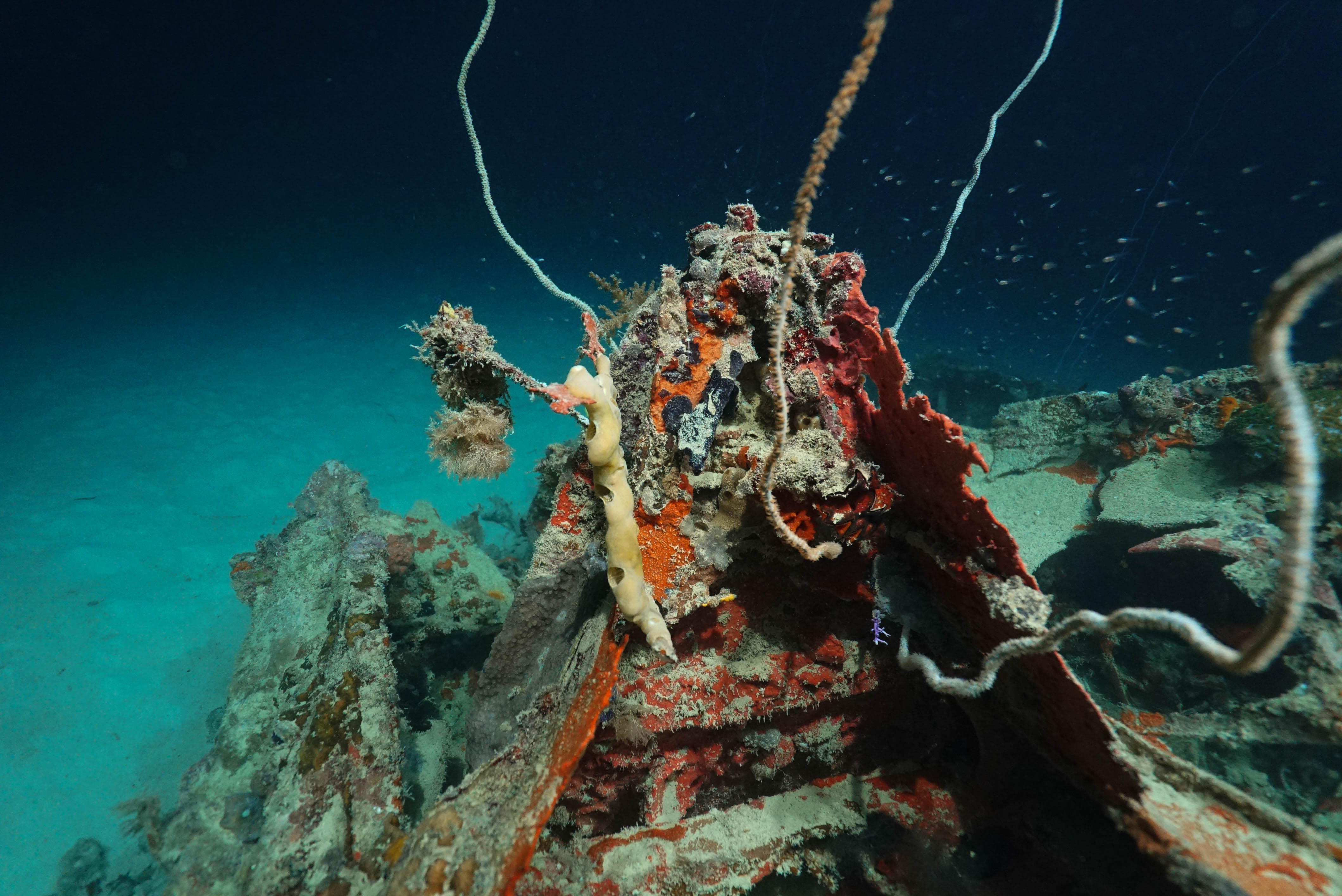 The remains of the missing Grumman TBM-1C Avenger. Photo Courtesy of Scripps Institution of Oceanography