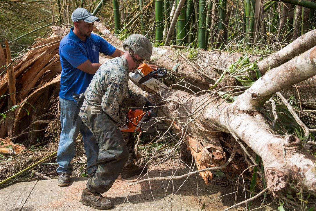 A Marine and a resident clear a tree from the main road as part of Hurricane Maria relief efforts in Ceiba, Puerto Rico, Sept. 27, 2017. (Marine Corps photo)