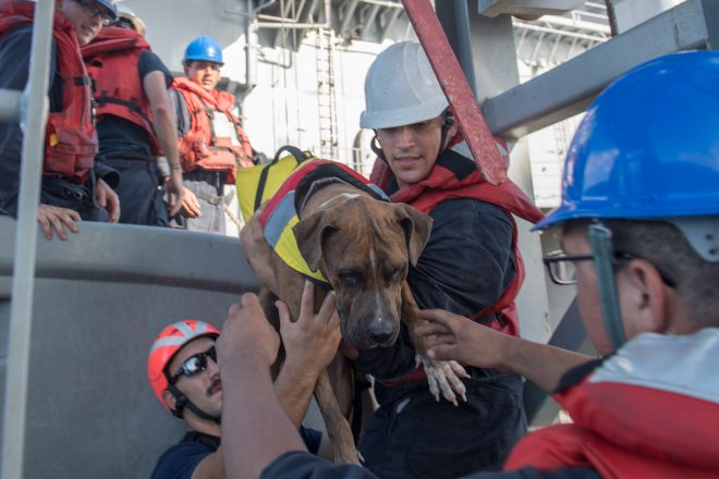 VIDEO: USS Ashland Rescues Two Mariners, Dogs Adrift for Months in Pacific